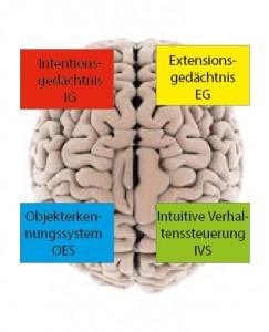 Gehirngerechtes Zeitmanagement